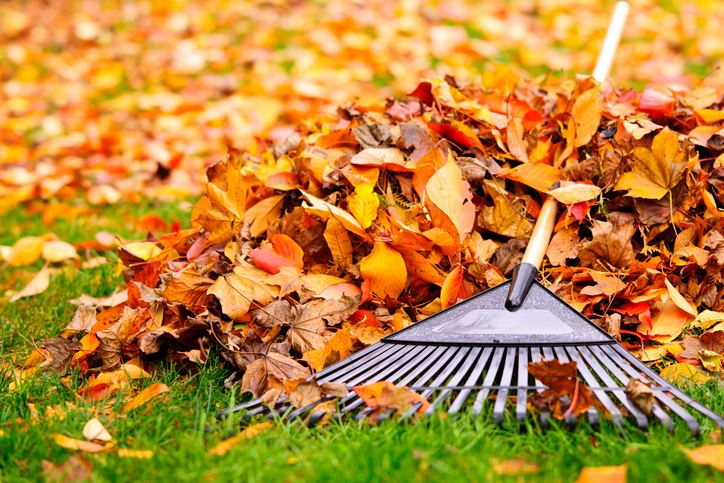Fall-leaves-with-rake